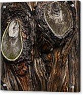 Tree Owl Acrylic Print