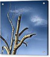 Tree Pointer Acrylic Print