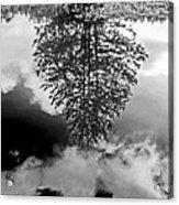 Tree Reflected  Acrylic Print