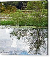 Tree Reflecting In Pond Acrylic Print