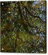 Tree Reflection Acrylic Print