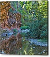 Tree Reflection Acrylic Print