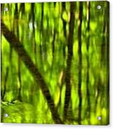 Tree Reflections Acrylic Print by Adam Jewell