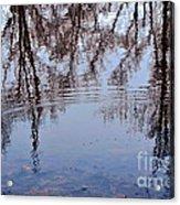 Tree Reflections I Acrylic Print