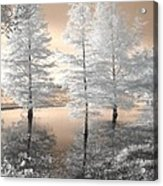 Tree Reflections Acrylic Print by Jane Linders