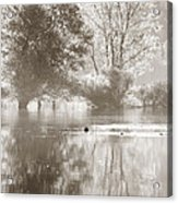 Tree Reflections Acrylic Print