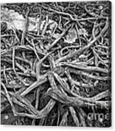 Tree Remains Acrylic Print by Charline Xia