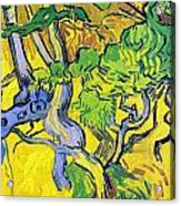 Tree Roots And Tree Trunks Acrylic Print by Vincent Van Gogh