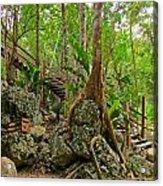 Tree Roots On Rock Acrylic Print
