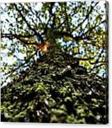 Tree Scales Acrylic Print by Christian Rooney