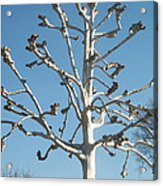 Tree Sculpture Acrylic Print by Paula Rountree Bischoff