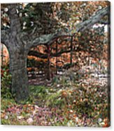 Tree Series 46 Acrylic Print