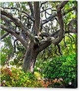 Tree Series 48 Acrylic Print
