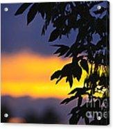 Tree Silhouette Over Sunset Acrylic Print