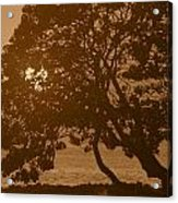 Tree Silhouettes Acrylic Print