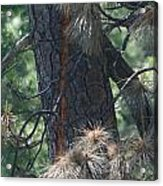 Tree Struck By Lightning Acrylic Print