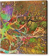 Tree Study Acrylic Print