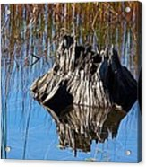 Tree Stump And Reeds Acrylic Print