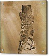 Tree Stump The Forgotten Series 05 Acrylic Print