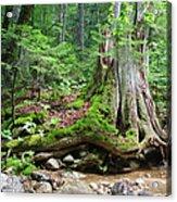 Tree Stump - White Mountains New Hampshire Acrylic Print