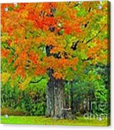 Tree Swing Acrylic Print