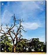 Tree Timestack Acrylic Print