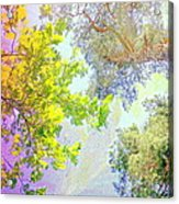when the tree tops are looking down at me I am feeling little but also very lucky  Acrylic Print