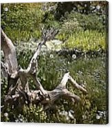 Tree Trunk In The Meadow Acrylic Print
