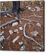 Tree Trunk Roots And Rocks Acrylic Print