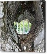 Tree View Acrylic Print