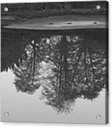 Tree Water Reflection 21 Acrylic Print