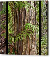 Tree Wear By Nature Acrylic Print