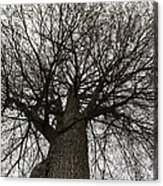 Tree Web Acrylic Print