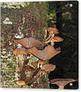 Tree With A Fungus Acrylic Print