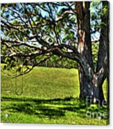 Tree With A Swing Acrylic Print