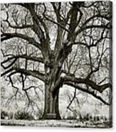Tree With Bench Acrylic Print by Greg Ahrens
