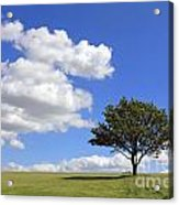 Tree With Clouds Acrylic Print