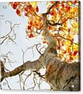 Tree With Half Of The Leaves Missing Acrylic Print