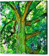 Tree With Owl Gnome And Mushroom Acrylic Print
