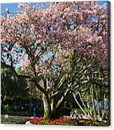Tree With Pink Flowers Acrylic Print