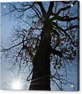 Tree With Sun Acrylic Print