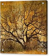 Tree Without Shade Acrylic Print