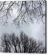 Treeching For More Acrylic Print