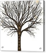 Treedom Acrylic Print
