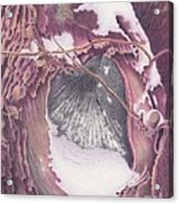 Treeheart Acrylic Print by Elizabeth Dobbs