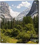 Trees - Forests - Mountains  Acrylic Print