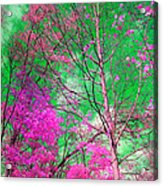 Trees Alive In Pink Acrylic Print