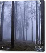Trees Along Greenlake In Fog Acrylic Print