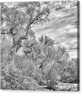 Trees And Clouds Acrylic Print
