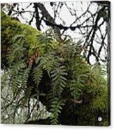Trees And Ferns And Moss Ecosystem Acrylic Print by Lizbeth Bostrom